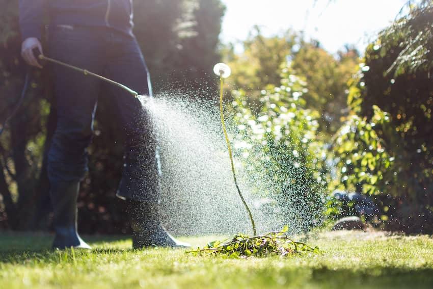 San Bernardino Outdoor Pest Exterminator