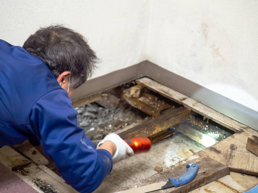 Fort Worth Mold Removal Process