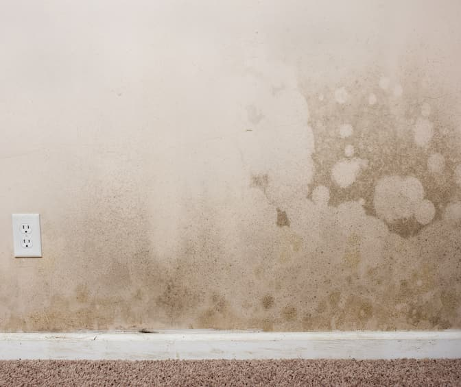 Fort Worth Types of Mold