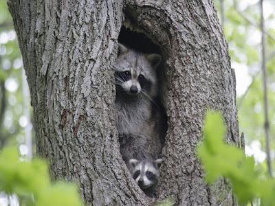 Cleveland Wildlife Control