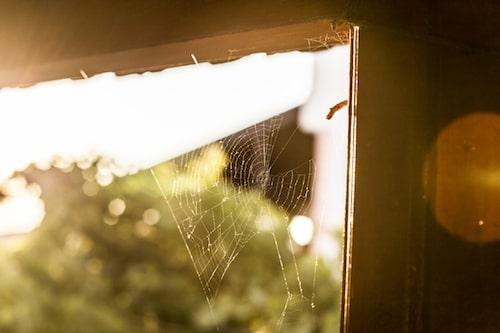 Spider Infestation in Cape Coral